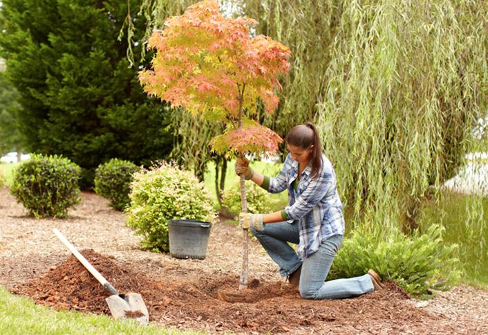 easy-steps-to-plant-new-tree-HT-PG-OD-hero