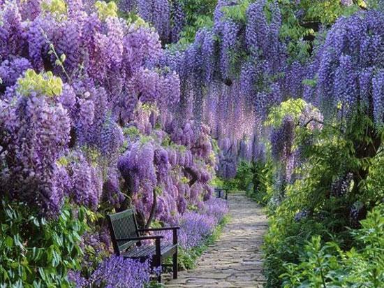 zahrady-wisteria-uvod